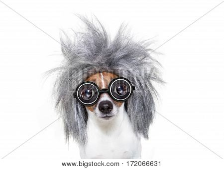 Intelligent Smart  Dog With An Idea