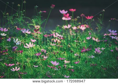 Background from tender soft pink beautiful flowers in green grass, floral natural vintage hipster image