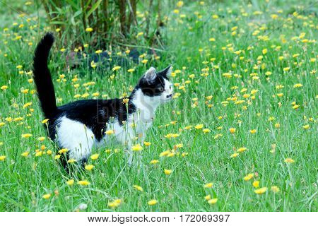 young rustic cat on the lawn with flowers