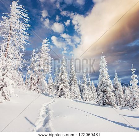 Fantastic winter landscape, steps, something leading into the mountains. Frosty sunny day in the mountains. In anticipation of the holiday. Carpathian, Ukraine, Europe.
