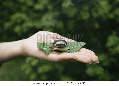 Small Snail on the palm of a woman.