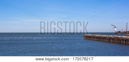 Many Seagulls Flying And Sitting On The Water And On The Rocks Of The Black Sea Town Of Poti, Georgi