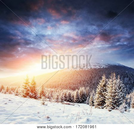 Mysterious winter landscape majestic mountains in winter. Magical winter snow covered tree. Carpathian, Ukraine. Europe
