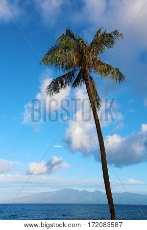 Palm Tree. Palm Trees sway gently in the warm tropical breeze on the magical island of Maui Hawaii with a beautiful blue sky and fluffy white clouds.