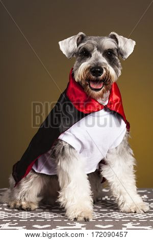Schnauzer male dog costume evil portrait pet