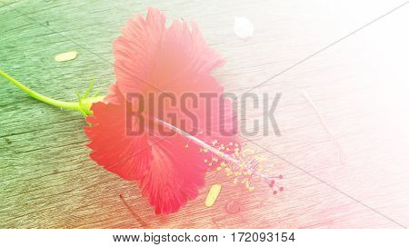Red flower on wood floor with color filters