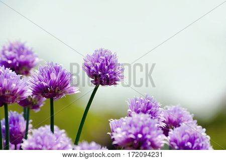 Photo of Spring and Summer Bright Flower