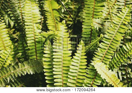 Photo of the Green Natural Fern Background
