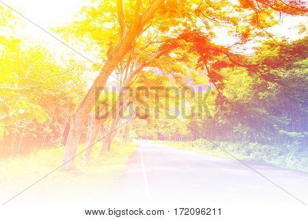 Landscape of road under the trees green tunnel