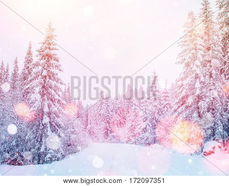 Mysterious winter landscape majestic mountains in winter. Magical winter snow covered tree. Dramatic scene. Bokeh light effect, soft filter. Carpathian. Ukraine. Europe