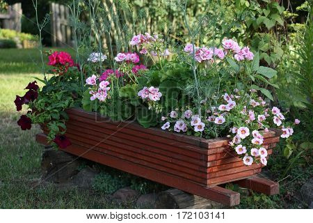 In a garden on wooden details there is an original box with different flowers.