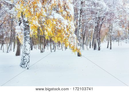 October mountain beech forest with first winter snow. In anticipation of holidays