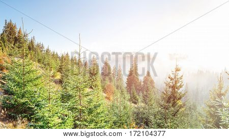 Sunlight in the green forest early morning. Fantastic fog in the mountains. October in the early winter days. Carpathian. Ukraine, Europe.