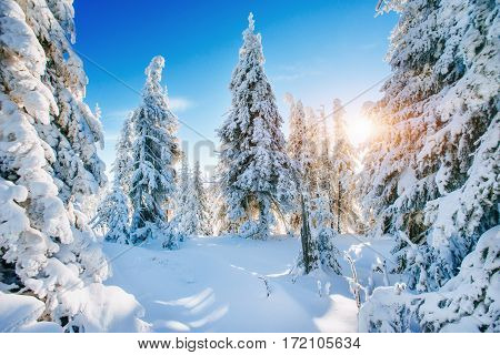 Fantastic winter landscape. Magic sunset in the mountains a frosty day. On the eve of the holiday. The dramatic scene. Carpathian, Ukraine, Europe. Happy New Year.