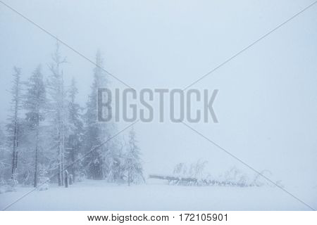 Dense fog in the mountains. Magical winter snow covered tree. In anticipation of the holiday. Dramatic scene. Happy New Year. Carpathians. Ukraine, Europe