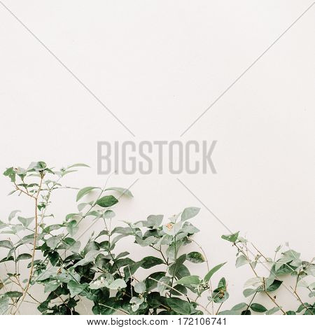 Green leaf bush near beige wall. Minimalistic floral background.