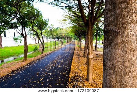 Asphalt running and bicycle lane in city park autumn season front focus blurred background