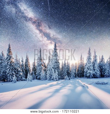 Dairy Star Trek in the winter woods. Dramatic and picturesque scene. In anticipation of the holiday. Carpathian, Ukraine, Europe.