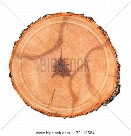 Wood round log isolated on white background.