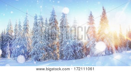Sunlight breaks through the tree crown in the mountains. Photo greeting card. Dramatic and picturesque scene. Bokeh light effect, soft filter. Carpathian, Ukraine, Europe.