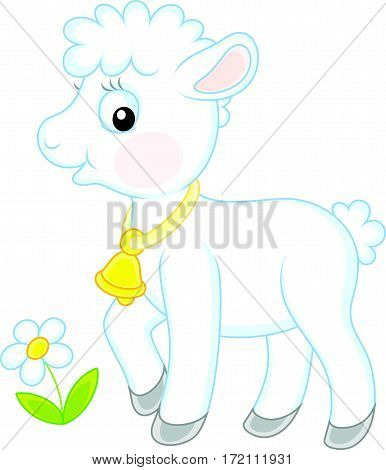 Vector illustration of a Small white lamb walking