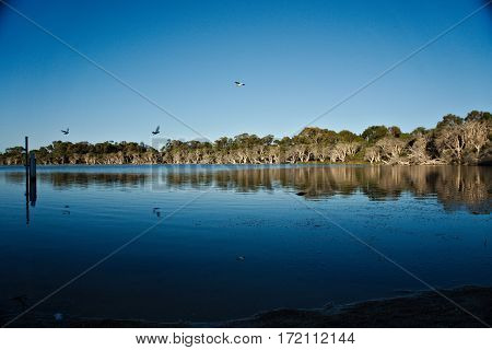 Reflective lake view with gull flying across