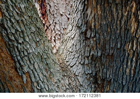 The tactile of a tree as a background