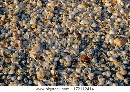 Tons of shells on the beach - background