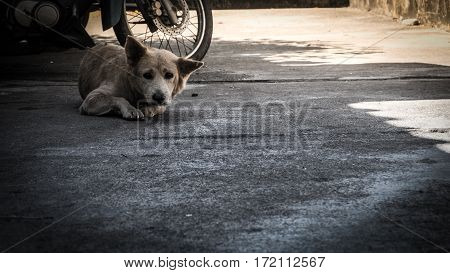 Homeless dog are staring suspiciously at the camera.