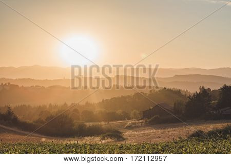 Bright Sun Over Rolling Hills In Newberg, Oregon