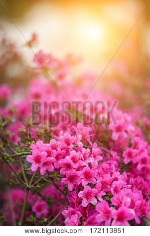 Soft Spring Flowers