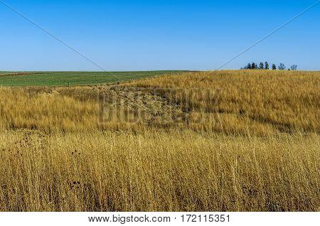 Prairie at Neal Smith National Wildlife Refuge near Prairie City Iowa