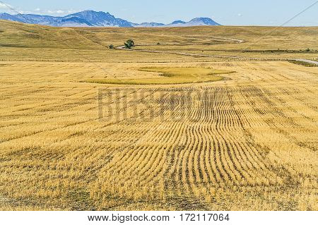 Recently harvested fields with a winding road heading toward the mountains