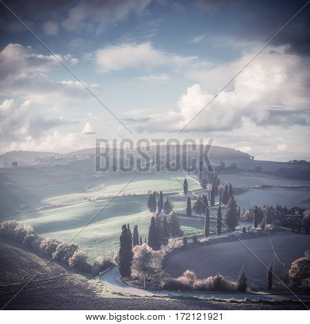 Vintage Rural Landscape With Cypress