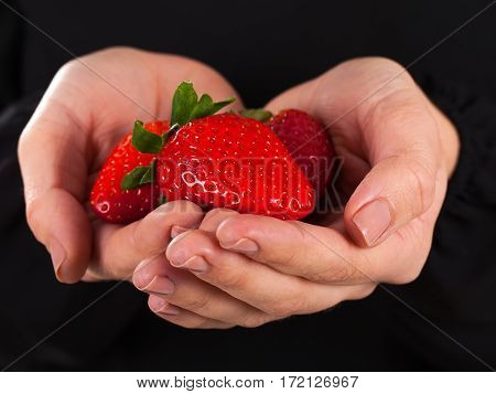 Close up picture woman holding a handful of delicious strawberries on a black background