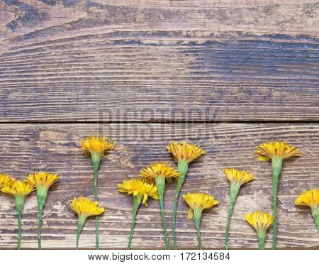 dandelions on the boards.simple rustic background.toned.view from above