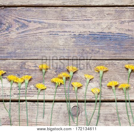 dandelions on the boards.simple rustic background.toned.top view.