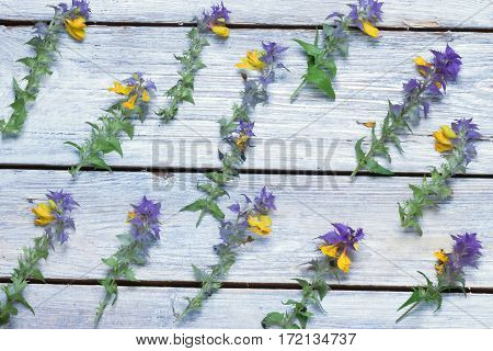 wild flowers on the boards.background.view from above