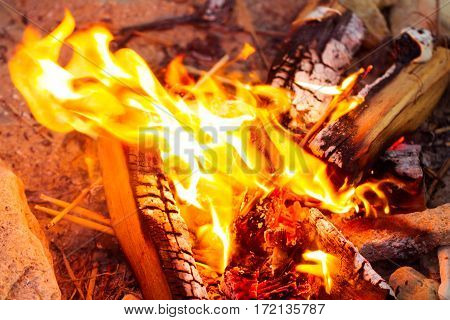 Closeup of blazing campfire coals fire in nature