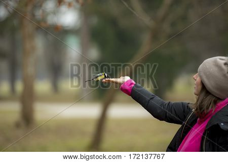 Woman in winter warm clothes stretching arm with open palm feeding great tit bird standing outdoors. Park trees blurred in background. Copy space.
