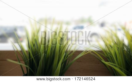 cafe decoration style : grass in wooden flowerpot in restaurant selective focus.