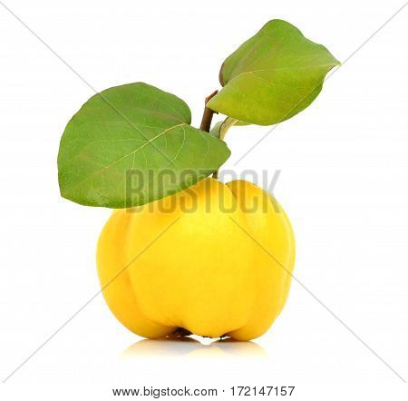 Ripe quinces isolated on white background with leaves