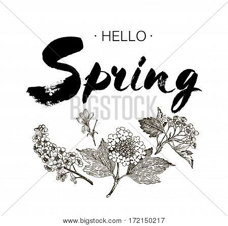 Phrase Hello spring Brush Pen lettering isolated on background. Handwritten vector Illustration. Handwritten modern brush lettering. Hand drawing elements design viburnum hawthorn wild cherry hasel honeysuckle