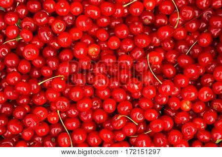 Red Cherries. Background. Close-up n the outdoor