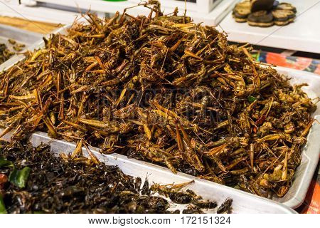 Fried Of Many Warm Insect Alternative Protein Nutrition
