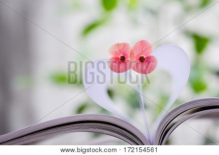 Couple of Crown-of-thorns flower on heart shape which made by white paper notebook. Clear bright nature background