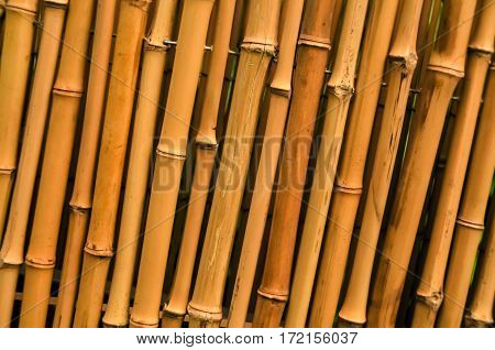 A bamboo line up together in a fence line