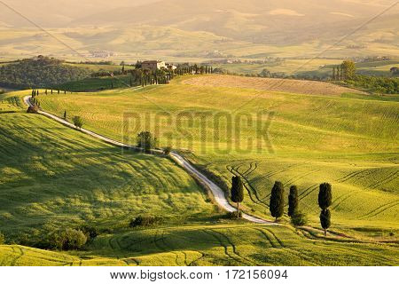 Pienza, Italy - May 21, 2015: Big cypress trees along the famous white road or strada bianca towards Terrapille in Val d'Orcia valley Tuscany Italy. The movie 'The Gladiator' was recorded here.