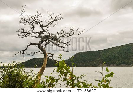 A curvy tree by the water's edge