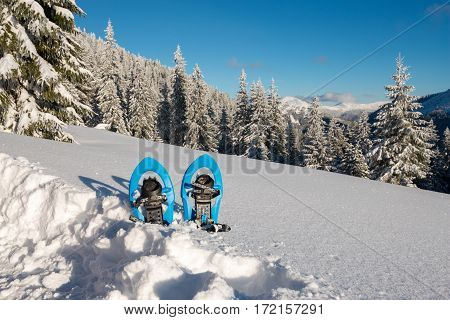 Blue Snowshoes Standing In Deep Snow